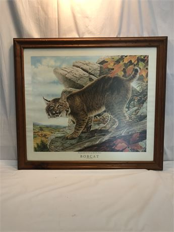 "OU ""Bobcat"" by Don Whitlatch"