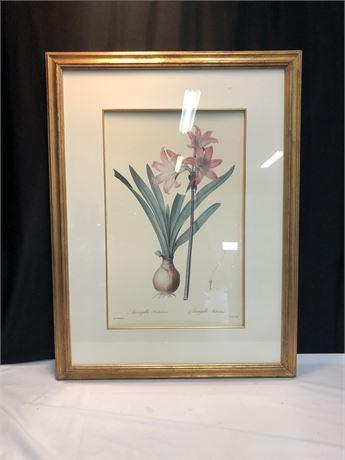 Pierre Redoute Amaryllis Belladonna Flower Art