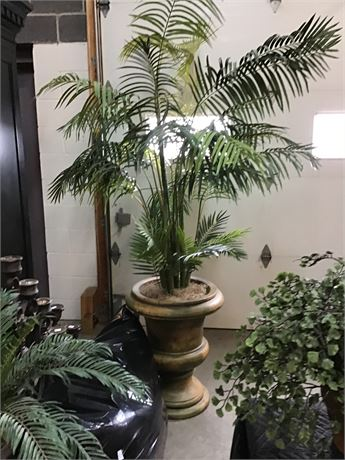 Palm Tree with Clay Pot Large