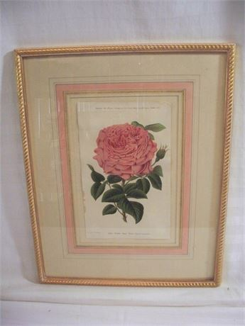 VINTAGE FRAMED AND MATTED BOTANICAL CHROMOLITH - ROSE MADEM ANNIE WOOD
