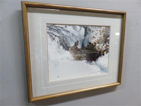 "THOMAS MANGELSEN ""Hiding Place Cottontail"" Limited Edition Photo Print"
